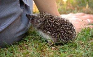 Ростовские учёные изучают, передают ли коронавирус животные