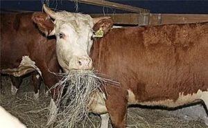 В Калмыкии сложилась критическая ситуация с кормами