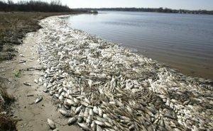 В Калмыкии весь берег водохранилища завален мёртвой рыбой