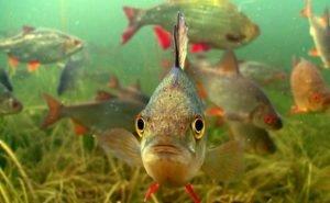 На Дону планируют развивать пастбищное рыбоводство