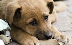 Прокуратура Калмыкии проверит информацию о «концлагере для собак»