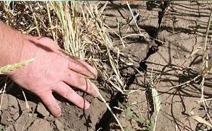 На борьбу с последствиями засухи фермеры Калмыкии получили 612,5 млн рублей
