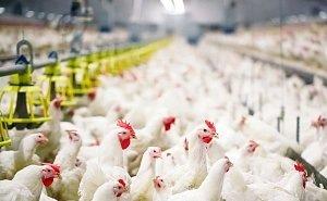 В Астрахани зафиксирован единственный в мире случай заражения людей птичьим гриппом