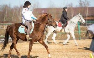 В Элисте возобновила работу школа конного спорта