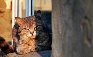 Укусила своя же кошка: в Волгоградской области от бешенства умерла женщина