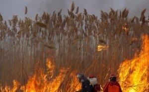 Пожары в Астраханской области объясняют обмелением Каспия