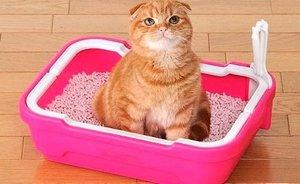 Выбор качественного наполнителя для кошачьего лотка