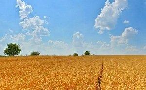 «Агрокомплекс Ткачёва» проиграл в суде спор по земле