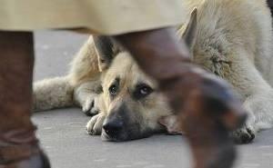 В Калмыкии для животных нет ни одного приюта