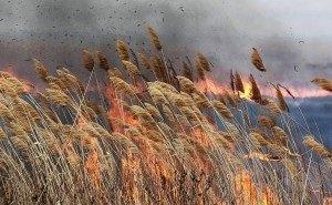 Названа причина возгорания камыша в Астраханской области