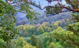 В Адыгее обследуют леса
