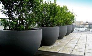 Что лучше: бетонные или пластиковые вазоны для растений