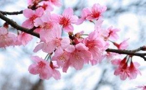 В Майкопе проходит фестиваль «Цветущий сад музея Востока»
