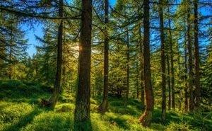 Леса Волгоградской области начали обрабатывать от вредителей