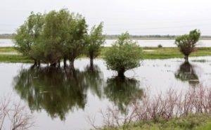 Учёные дали прогнозы по паводку в Астрахани