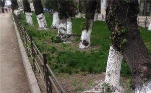 Белить деревья в Астрахани запрещено