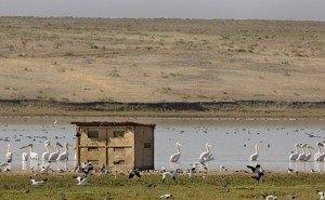 В Калмыкии обмелело уникальное озеро Маныч-Гудило