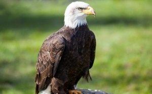 На астраханских орланах установили датчики