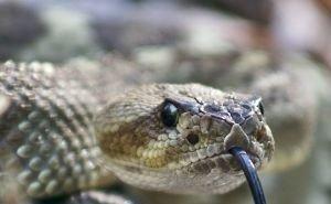 Змеи уже покусали 14 волгоградцев