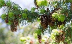 Найти причину гибели волгоградских лесов пока не могут
