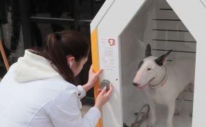 В Ростове хотят сделать «парковку» для собак