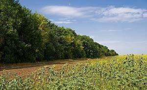 На Дону хотят передать лесополосы в аренду сельхозпроизводителям