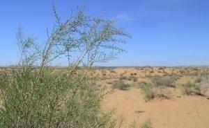 Сегодня — Всемирный день борьбы с опустыниванием