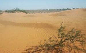 Для борьбы с опустыниванием в Калмыкии придумали специальную сеялку