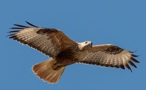 В Калмыкии продолжают массово гибнуть птицы