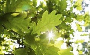В Волго-Ахтубинской пойме обещают высадить 200 тысяч деревьев