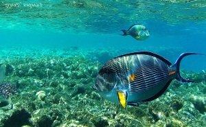 Астраханцы создают устройство для распознавания рыб