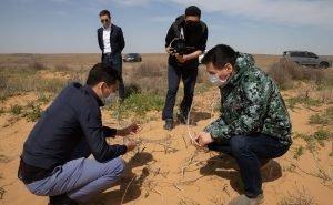 На борьбу с опустыниванием Калмыкия в 2021 году потратит 140 млн рублей