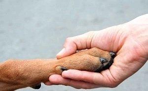 В Астрахани предлагают наказывать тех, кто выбрасывает животных