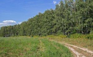 В Волгоградской области хотят реализовать план лесополос 40-х годов