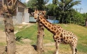 Ростовский зоопарк доказал, что способен содержать животных, как положено