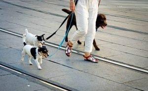 Астраханцам могут запретить держать несколько собак в одной квартире