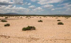Учёные предлагают бороться с опустыниванием с помощью бактерий