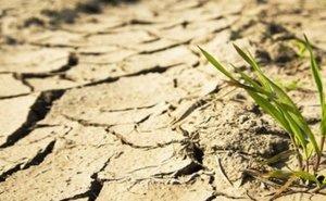 В Калмыкии из-за засухи вынуждены вводить режим ЧС