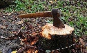 Ростовчане против вырубки здоровых деревьев в парке «Дружба»