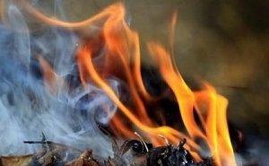 Астраханцы жалуются на скопление пожароопасных сухих веток в городе