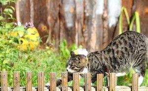 В Волгоградской области бешеный кот покусал ребёнка