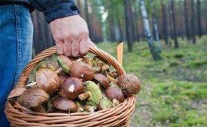 В Волгоградской области начали травиться грибами