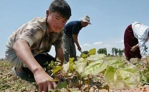 Астраханским фермерам могут разрешить нанимать столько мигрантов, сколько нужно